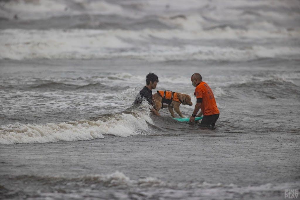 ドッグサーフィン競技の様子 / photo by Shuji Izumo